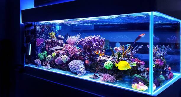 fish-tank-big-0