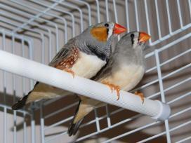 finches-birds-big-0
