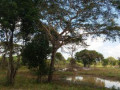 commercial-land-for-sale-in-hambantota-small-0