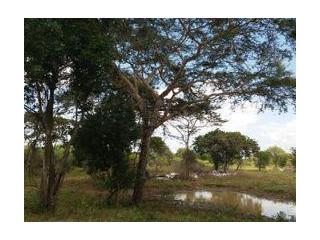Commercial Land for Sale in Hambantota