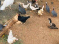 ducks-small-0