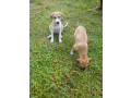 free-dogs-for-kind-homes-small-2