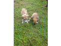 free-dogs-for-kind-homes-small-1