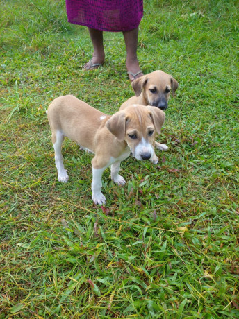 free-dogs-for-kind-homes-big-0