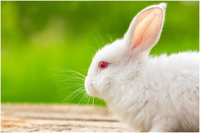 rabbits-big-0