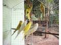 love-birds-koodu-small-0