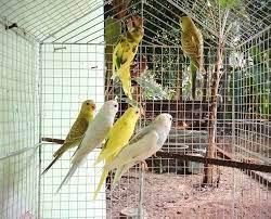 love-birds-koodu-big-0