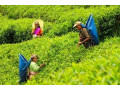 agriculture-officers-offered-small-1