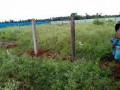 land-for-sale-in-vavuniya-uyilakkulam-for-sale-small-1
