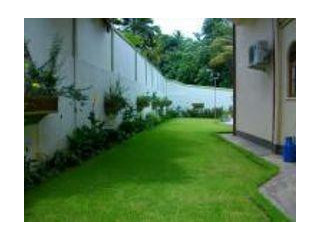 Garden Service and Grass with Landscaping