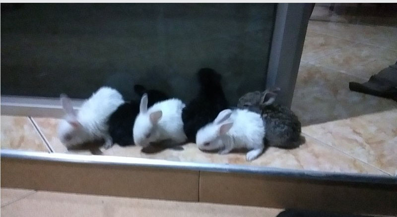baby-bunnies-big-0