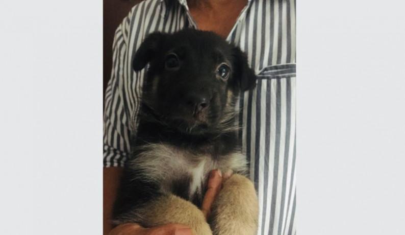 german-shepherd-female-puppy-big-2