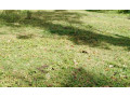 land-for-sale-in-kurunegala-small-0