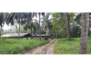 FOR SALE FARM AND COCONUT STATE In HIRIPITIYA 17 Acres (12,5 Deed+ 4,5 Reservation)