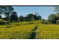 land-for-sale-in-rambukkana-small-0