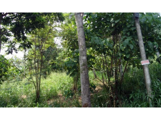 Valuable Land for Sale in Kegalle Kegalle