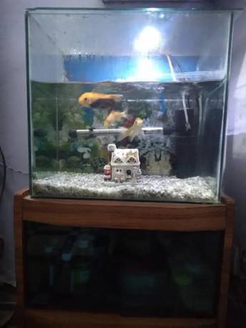 fish-tanks-big-0
