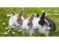 adult-rabbit-small-0
